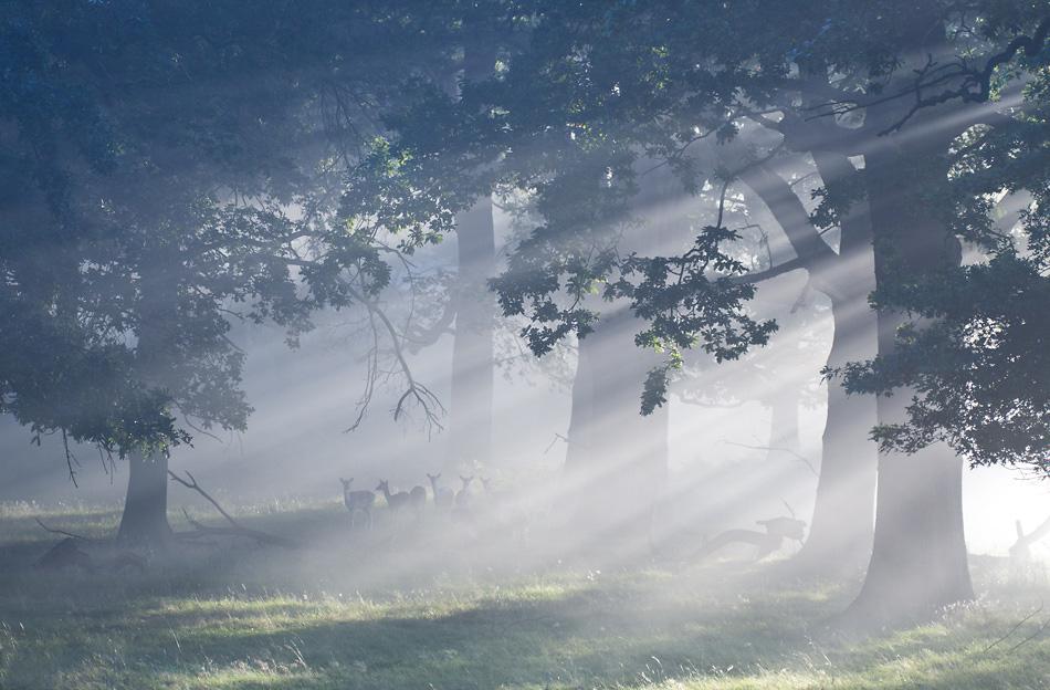 光影造就童话般意境 英国摄影师作品赏