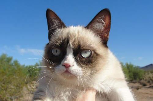 【高清图】 盘点2012爆红网络的动物:谁是你的最爱图5