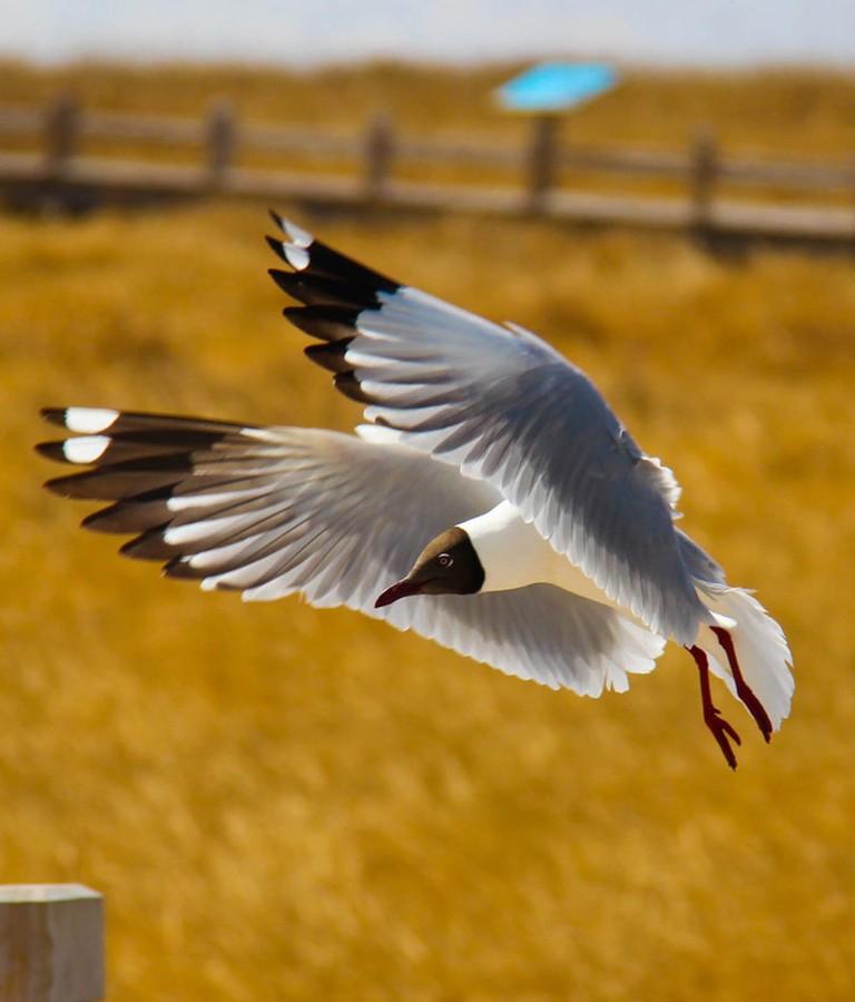 【高清图】 行摄候鸟求偶的春天 推荐4个拍鸟好去处图3