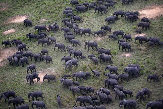【高清图】 巨型动物群落 令人震憾的生态摄影大作图5