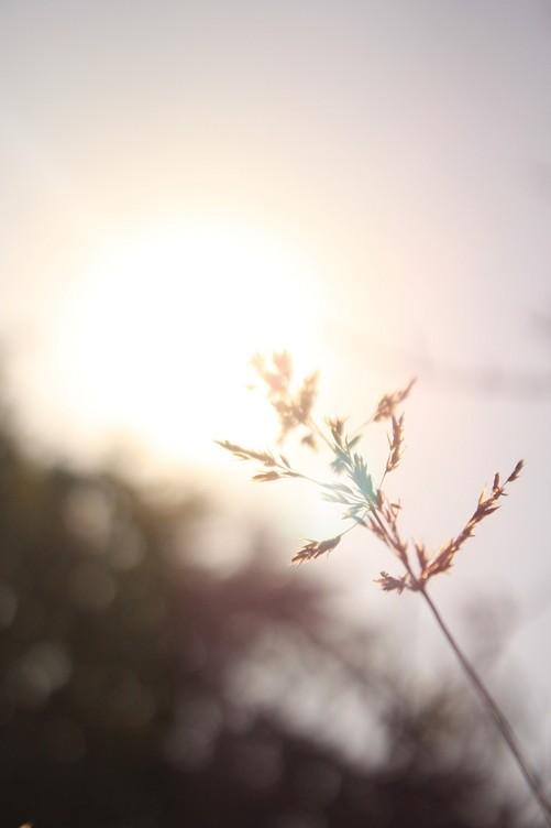 阳光中的麦穗 唯美意境花草摄影图片赏-中关村在线