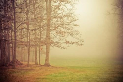 传说中的迷雾森林 唯美意境摄影图赏