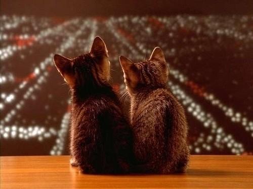 可爱的猫咪也可以拍出意境照