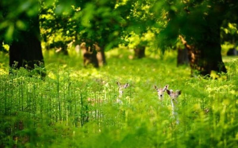 【高清图】 森林清晨的微光 童话系意境摄影作品赏图2