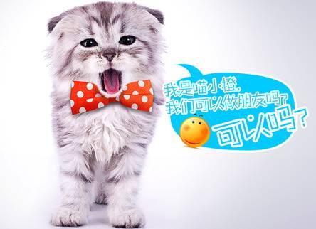 橙子做出动物造型