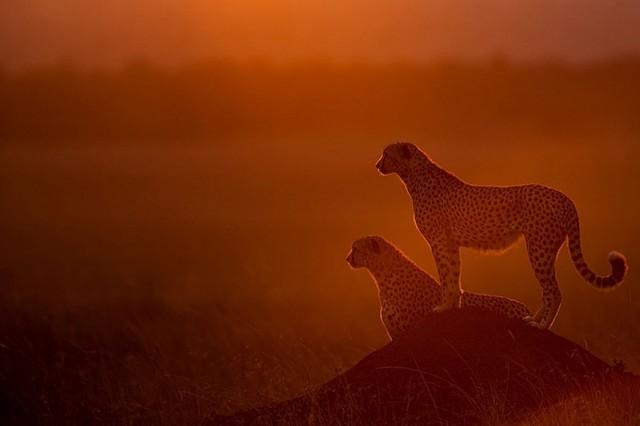 落日下的非洲草原剪影