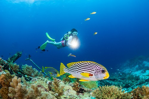 深蓝诗篇 索尼全画幅微单™A7RII水下摄影