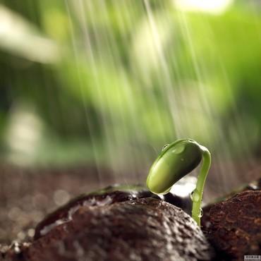 感受生命的力量 植物种子发芽高清组图