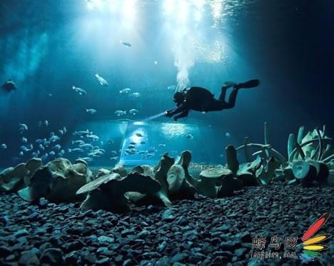 【高清图】 遗骸,沉船——神奇的海底世界图3