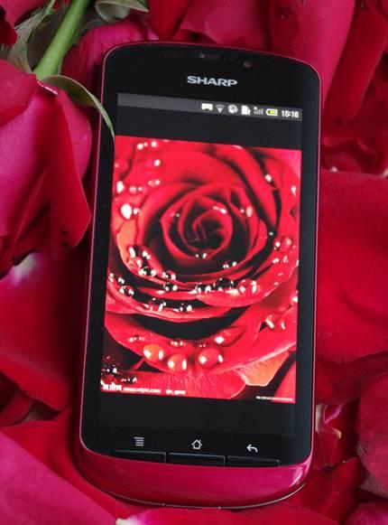 """绝色AQUOS PHONE 夏普""""玫瑰""""SH8298U让你HOLD住全场"""