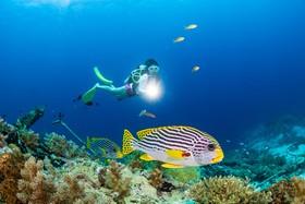 深藍詩篇 索尼全畫幅微單™A7RII水下攝影