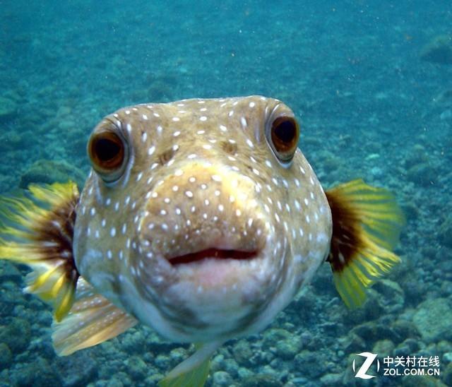 鱼的记忆只有7秒?日本科学家实力打脸